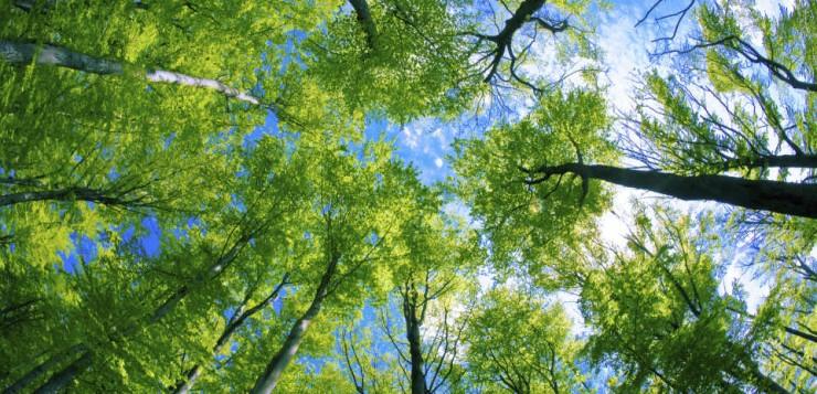 ecosystems-trees--tojpeg_1416407193192_x2