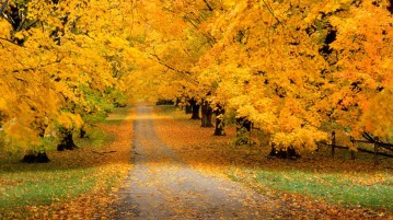 autumn-hd-wallpapers-10